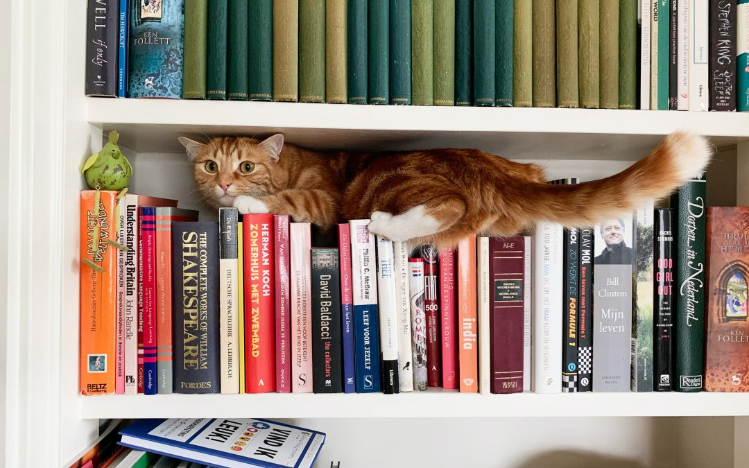 flexibility, cat on shelf